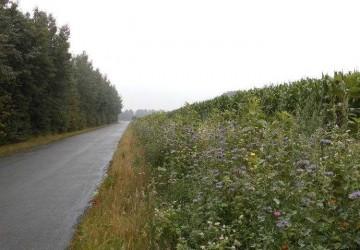 Bild 1 Wegeseitenrand-Progr-Vreden (13)verkl.