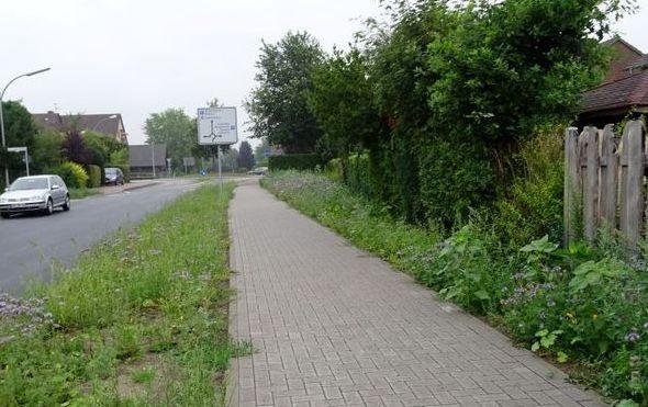 Bild 2 Blühstreifen Vreden-innerorts-verkl.