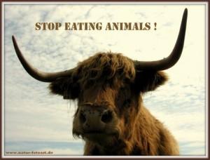 """Ein Ochse der in die Kamerau schaut und darüber steht """"Stop Eating Animals"""""""