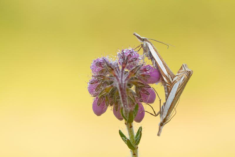 Insekten an einer Blüte