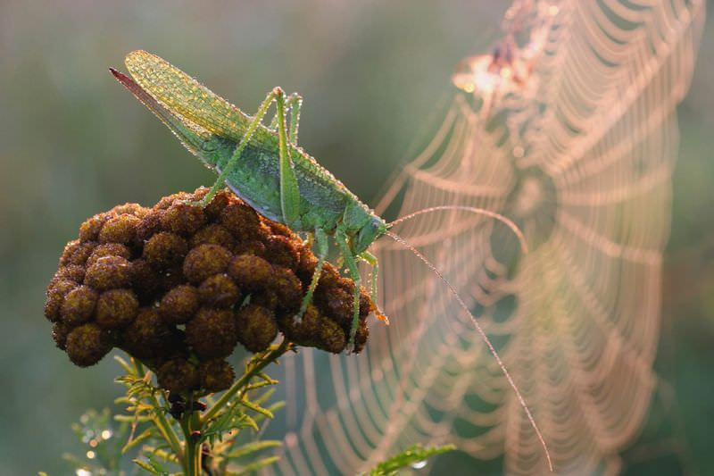 Insekt im Hintergrund ein Spinnennetz