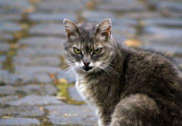 Katze auf dem Gehweg