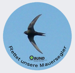 Logo der AG Mauersegler des BUND Hannover