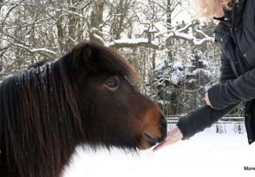 Ponny Paul
